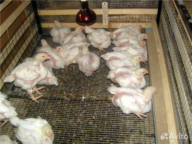 Домик для цыплят бройлеров своими руками