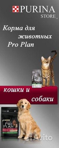 Корм для животных кошек и собак в Ростове-на-Дону - фотография № 4