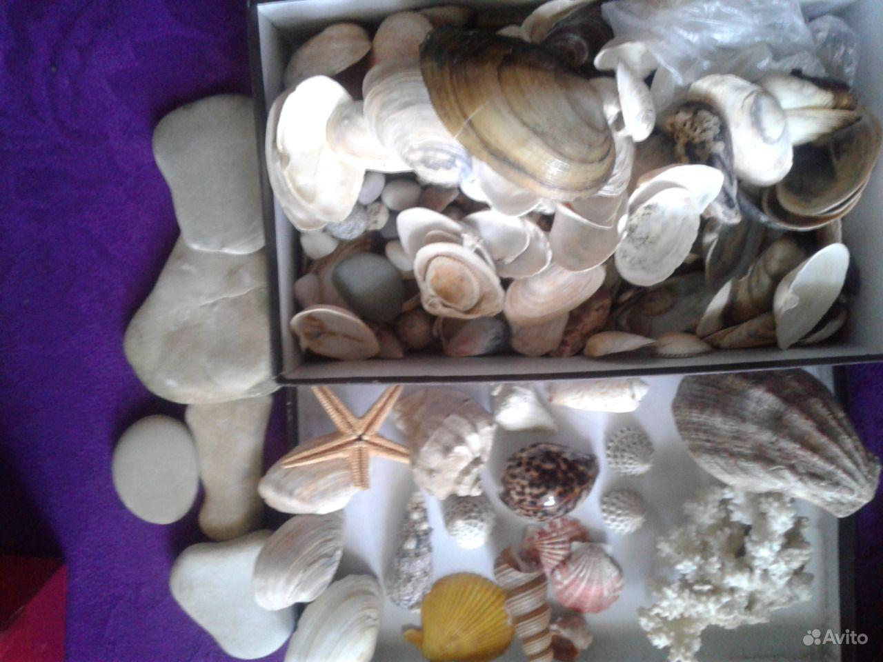Ракушки и камешки в аквариум