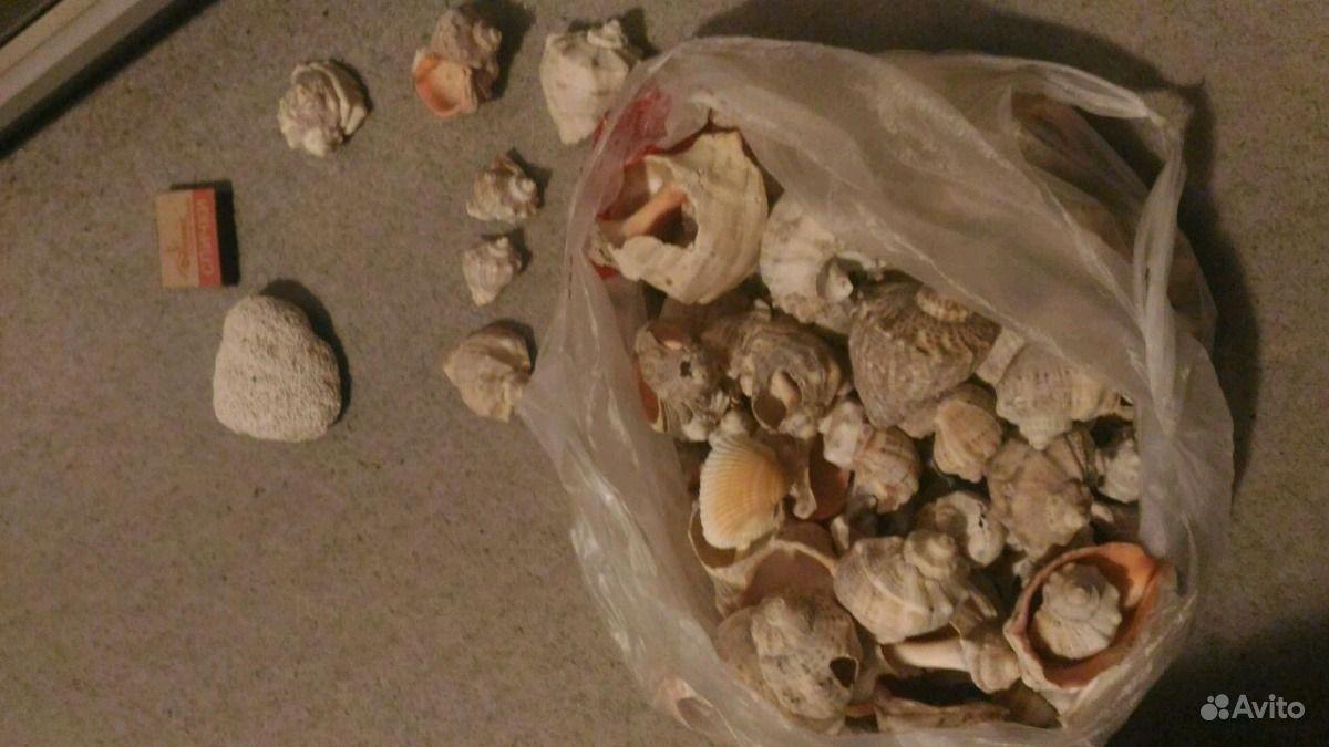 Ракушки рапаны раковины с Чёрного моря купить на Зозу.ру - фотография № 5