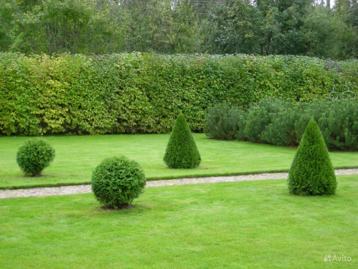 Ландшафтный дизайн, благоустройство, озеленение купить на Вуёк.ру - фотография № 4
