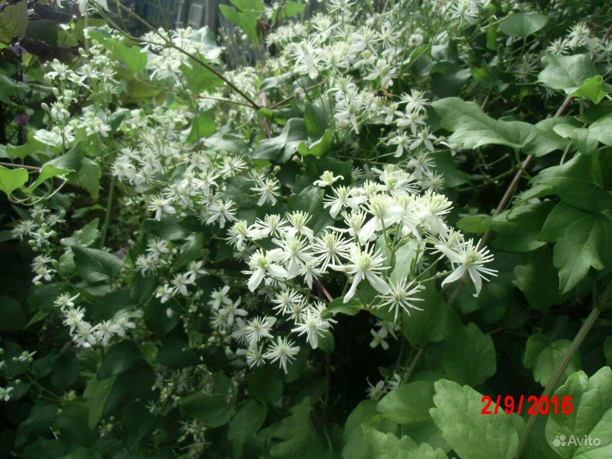 Цветы купить на Зозу.ру - фотография № 4