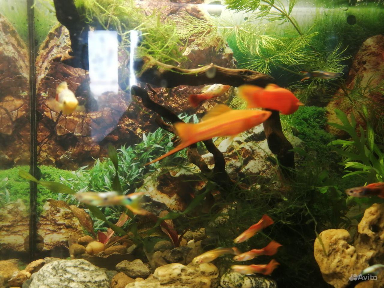 Обменяю рыбок