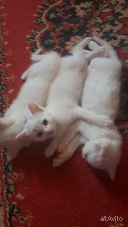Котята(мальчики)
