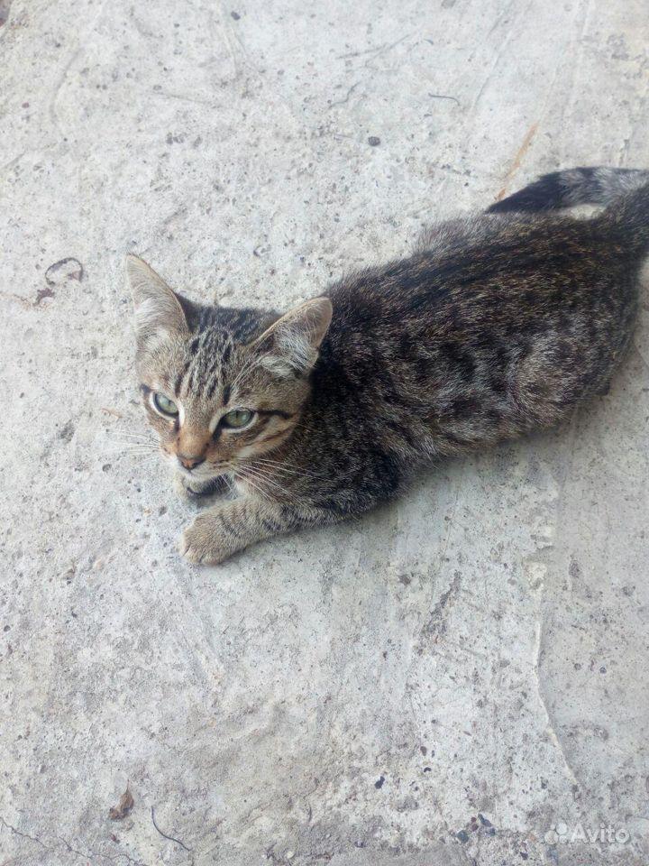 Котенок-мышелов