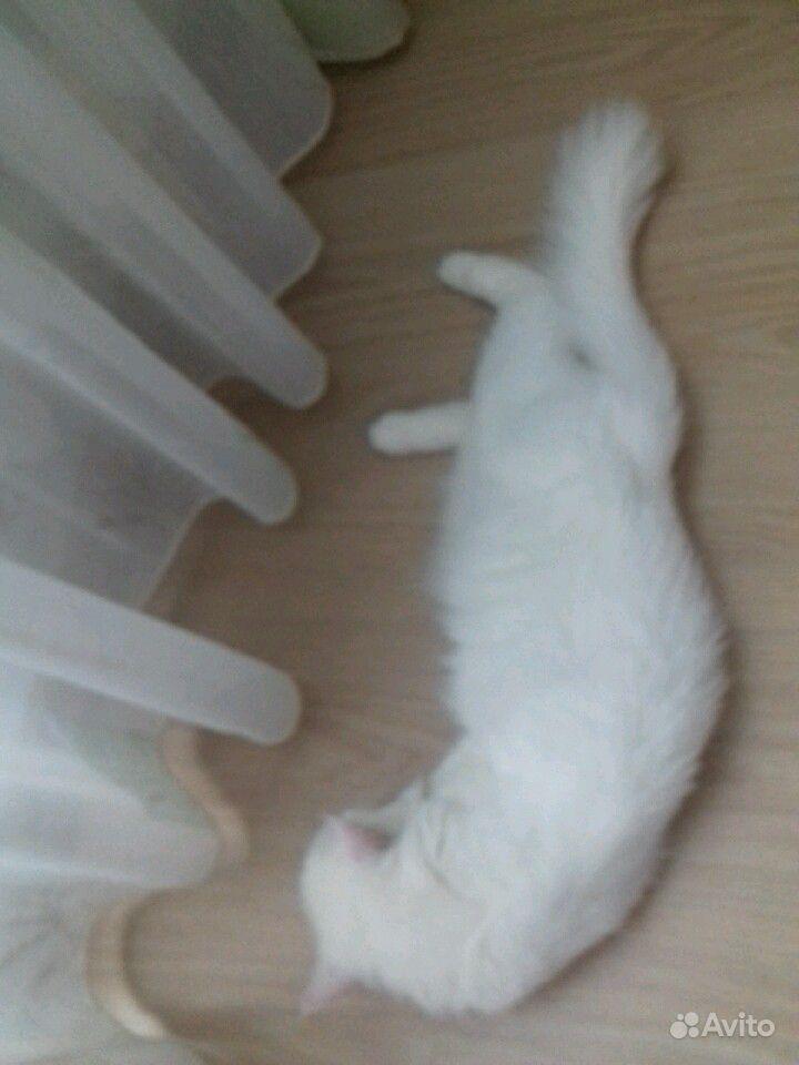 Кошка мотя отдам руки добрые