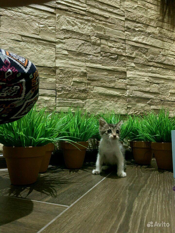 Кошечка в дар