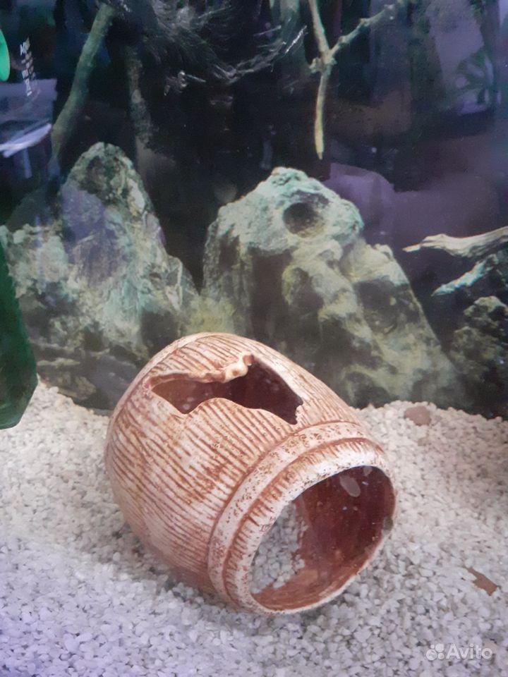 Продам аквариум с попугаем купить на Зозу.ру - фотография № 1