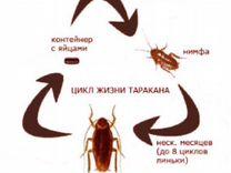 Уничтожение тараканов и клопов в квартирах — Предложение услуг в Москве