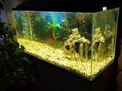 Аквариум 200л, с полкой, 3 рыбками и фильтром tetr