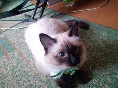 Кошка 4 месяца