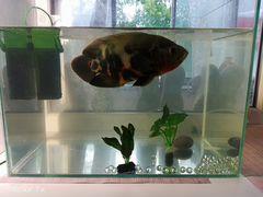 Аквариум с рыбой