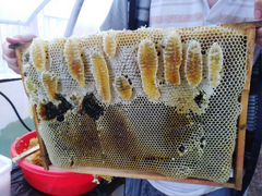Мёд цветочный лесной
