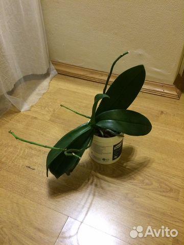 Константиновна купить растения на авито москва материалы