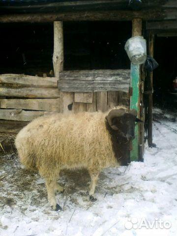 экранизация купить овец в ростовской области декретном отпуске уходу