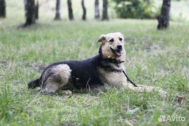Улыбчивая собака Шелли в добрые руки купить на Зозу.ру - фотография № 9