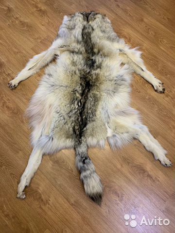Волк 89004365055 купить 1