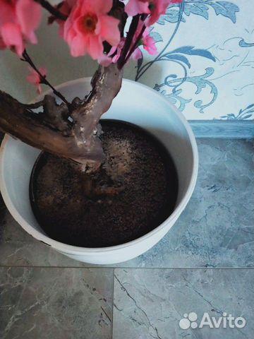 Дерево сакура купить 4