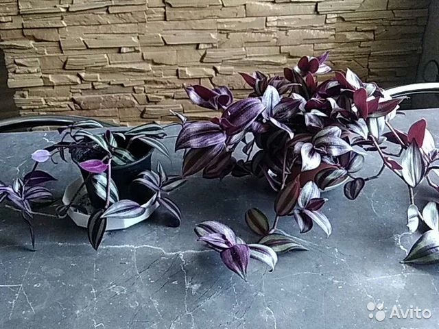 Комнатные цветы купить 7