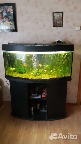 Авариум 200 л с рыбками купить на Зозу.ру - фотография № 2