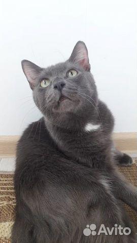 Котик ищет дом  89132414283 купить 3