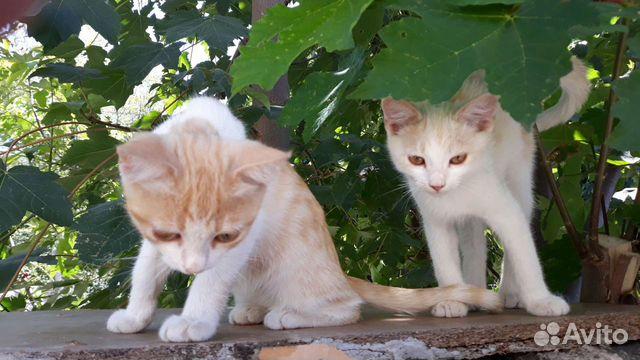 Котята в добрые руки  89787106687 купить 5