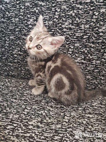 Кошка  89277279465 купить 3