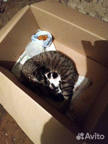 Кошка и 5-еро котят  89638099482 купить 3