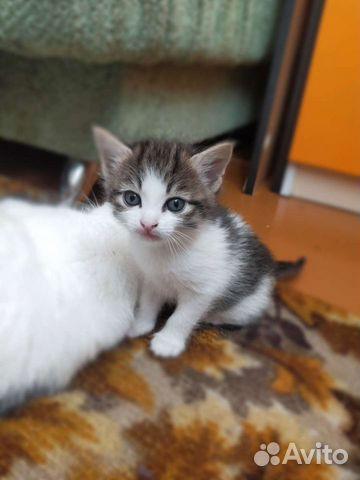 Kitty  89642177980 kaufen 1