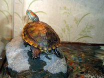 Отдам с.р.о.ч.н.о черепаху