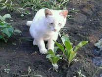 Котенок. Мальчик