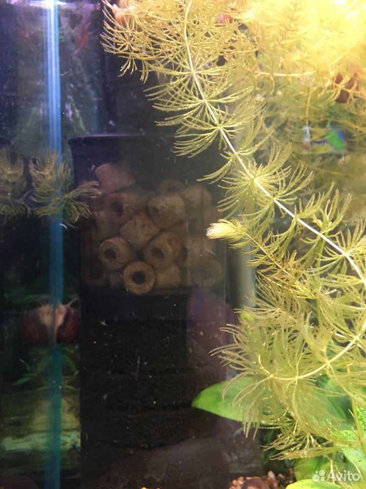 Aquarium 89825525555 buy 3