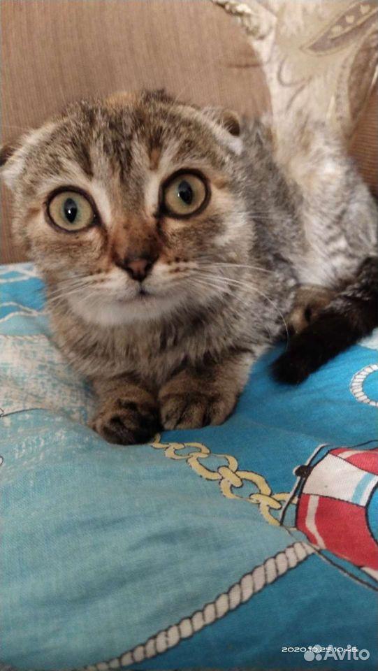 Кошка  89083193716 купить 3