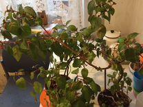 Излишки домашних растений