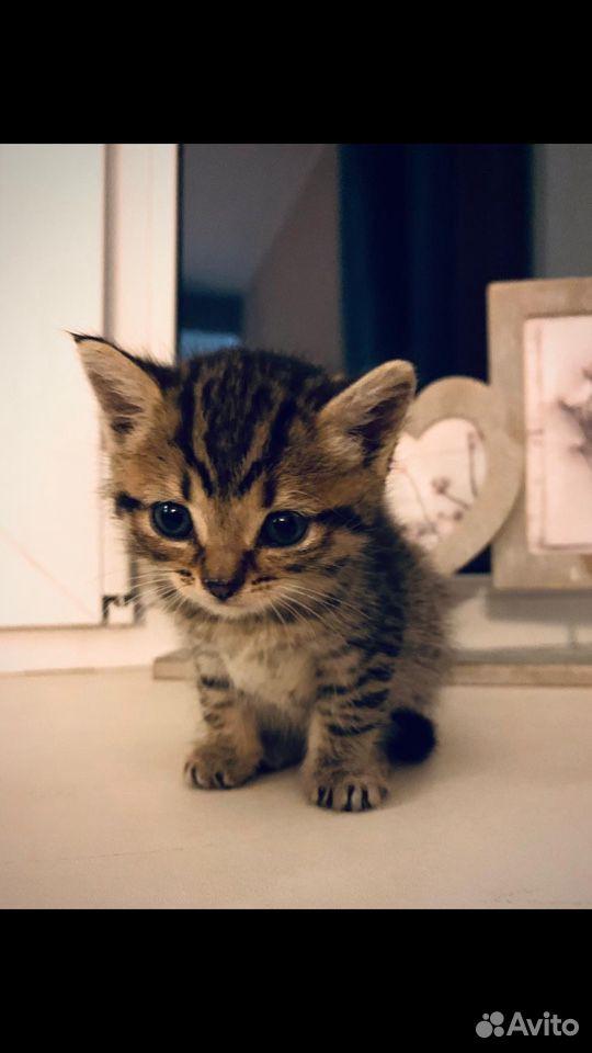 Котенок в добрые руки девочка  89618782390 купить 1