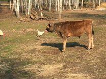Сдаётся в Аренду ферма с сыроварней