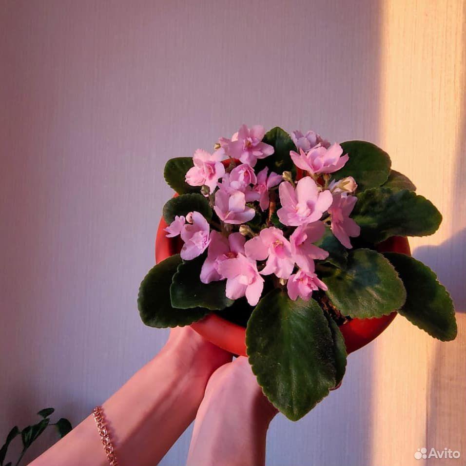 Цветы  89176088037 купить 1