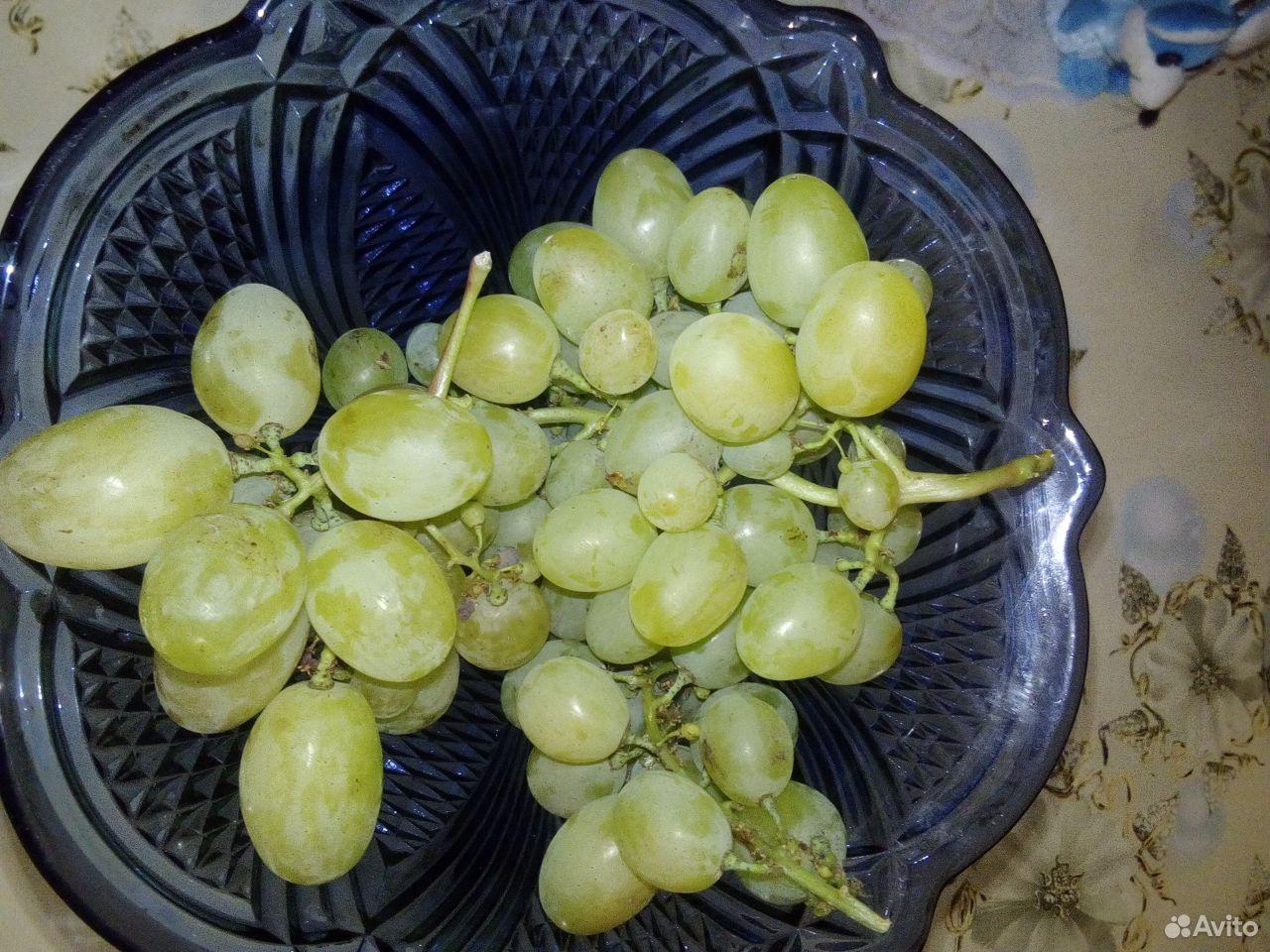 Черенки винограда  89531243354 купить 4