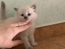 Невский маскарадный малыш