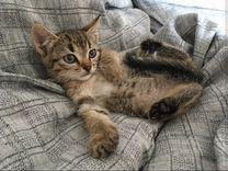 Отдам котёнка-девочку 2 мес
