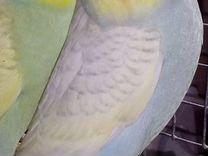 Симпатичные птенцы — Птицы в Москве