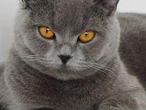 Котик - Ваш лучший друг