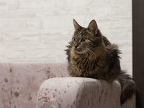Кошечка - котёнок в добрые руки