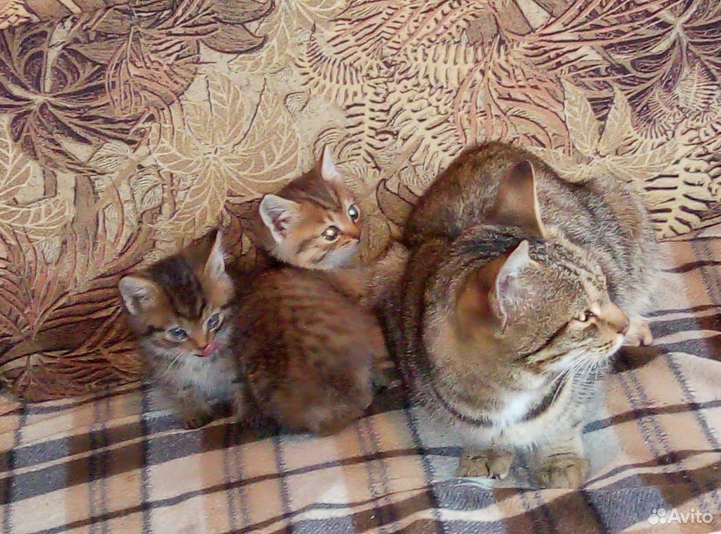 Котята мальчик и девочка  89965001605 купить 3
